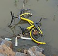 Ofo bike in a lake - 01.jpg