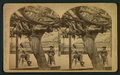Old Mammoth Grape Vine, from Robert N. Dennis collection of stereoscopic views 2.png