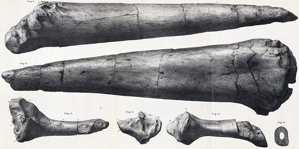Omosaurus armatus