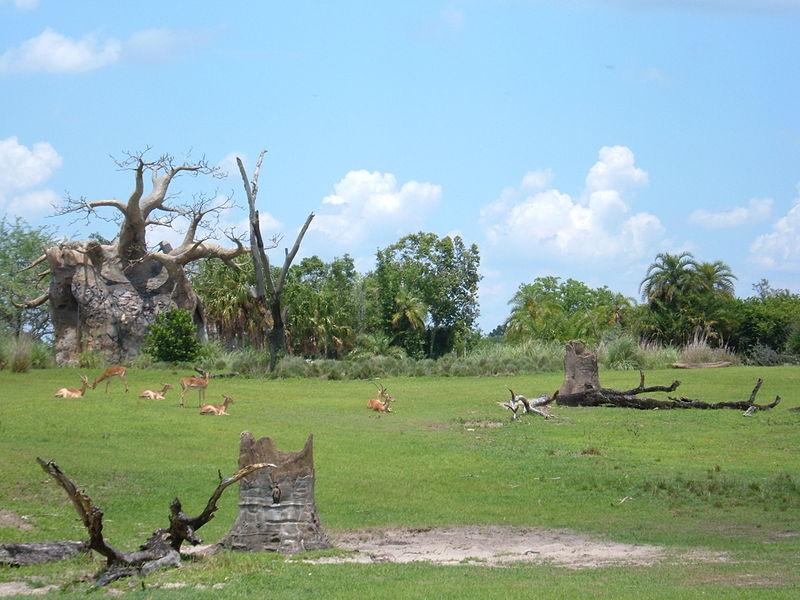 Parque Animal Kingdom (Safari)