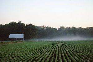 Ontario tobacco belt - Tobacco farm in Norfolk County, summer 2012.