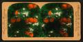 Orange Blossoms and Fruit, Los Angeles, Cal., U.S.A, by Singley, B. L. (Benjamin Lloyd) 2.png