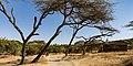 Oromia IMG 5272 Ethiopia (38978170814).jpg