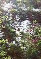Overbridge rain forest (2720233008).jpg