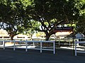 Owners' Enclosure, Eagle Farm Racecource, May 2013.jpeg