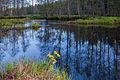 Põhja-Kõrvemaa looduskaitseala. 3.jpg