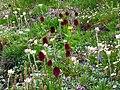 P1050652 - fiori selvatici.jpg