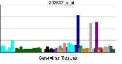 PBB GE ICAM1 202637 s ĉe tn.png