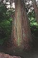 Pacific Rain Forest Sitka(Alaska)(js)01.jpg