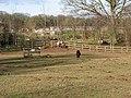 Paddock with Shetland Ponies - geograph.org.uk - 669402.jpg