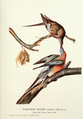 Page The Passenger Pigeon - Mershon djvu 47 - Passenger Pigeon.png