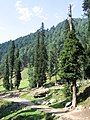 Pahalgam views 48.JPG