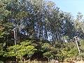 Paisagem Nativa Raposos - panoramio.jpg