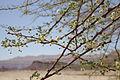 Parc de Timna (Eilat – Israël) (7583375950).jpg