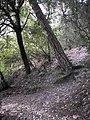 Parc de Vallvidrera 174-7487 IMG.JPG