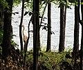 Parkers Creek Jordan Lake NC SP 3811 (35335542693).jpg