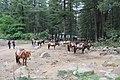 Paro Taktsang trail 01.jpg