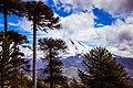 Parque Nacional Conguillío en lo Alto H.jpg