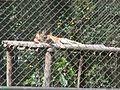 Parque Zoologico de Caricuao 2000 017.JPG