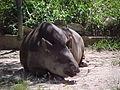 Parque Zoologico de Caricuao 2000 027.jpg
