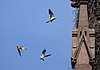 Parrots by a nest in the Green-Wood Cemetery gate (61839)a.jpg