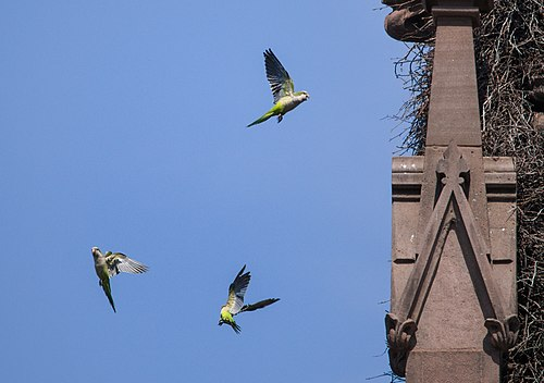 500px parrots by a nest in the green wood cemetery gate (61839)a