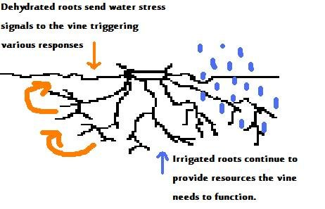 Partial rootzone drying irrigation