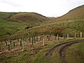 Pass Peth Sike, Upper Coquet Dale - geograph.org.uk - 326722.jpg