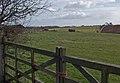 Pasture on White Gap Road - geograph.org.uk - 711725.jpg