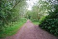 Path south of University Broad, UEA - geograph.org.uk - 1389864.jpg
