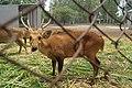 Patiala Zoo, Patiala (14).jpg