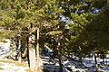 Picos de Urbión Picos de Urbión DSC 7137 (11551258056).jpg