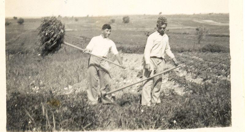 גבעת עדה קציר בשדות המושבה