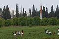 PikiWiki Israel 20531 Agriculture in Israel.jpg