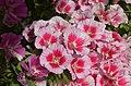 PikiWiki Israel 42463 Spring flowering.JPG