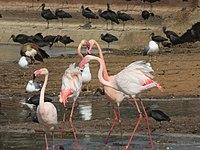 PikiWiki Israel 53081 wildlife animals.jpg
