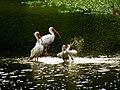 Pinckney Island National Wildlife Refuge (5957938093).jpg