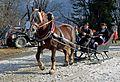 Pinzgauer Brauchtums- und Trachtenschlittenfest, 2. Februar 2014, 9.jpg