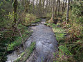 Pipers Creek Carkeek Park Seattle.jpg