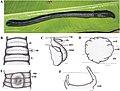 Pithemera tadulako (10.3897-zookeys.805.24834) Figure 3.jpg