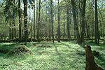 Białowieża Ormanı, Beyaz Rusya-Polonya