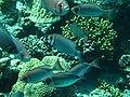 Port Ghalib march 2006-0185.jpg