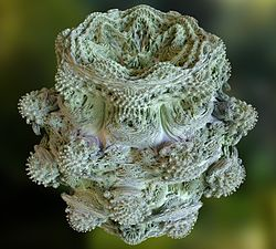 Power 8 mandelbulb fractal overview.jpg