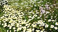 Pražská botanická zahrada, Prager botanischer Garten - panoramio (8).jpg