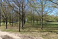 Prairie Janine-Thomas, Les Clayes-sous-Bois, Yvelines 4.jpg