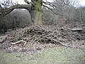 Pruning waste under old oak at edge of Collin's Coppice - geograph.org.uk - 1166887.jpg