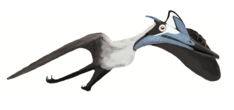 Life reconstruction of Pterodactylus antiquus