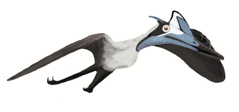 Pterodactylus BMMS7 life
