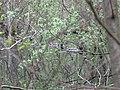 Purvs - panoramio (1).jpg