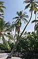 Puuhonua o Honaunau Historical Park, Captain Cook (504634) (24031020151).jpg